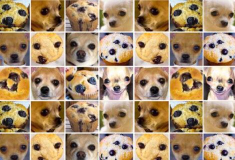 Chihuahua vs Muffin